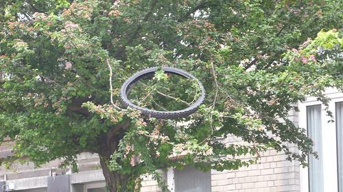 Le pneutier du Japon (Arboretum Bibendum)