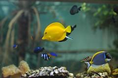 Tropischer Fisch im Zoo Parc de Beauval