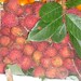 fresh lychees