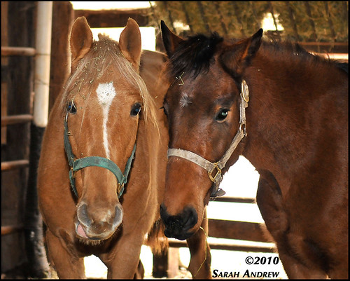 Camelot Auction: Hip 871 & 869