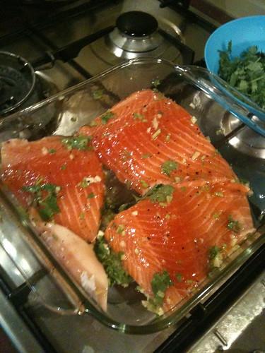 Salmon (6)