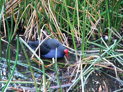 Dandenong Ranges Bird