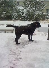 Magic in the snow