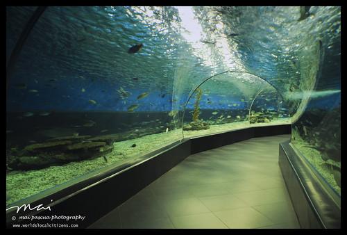 Manila Ocean Park006