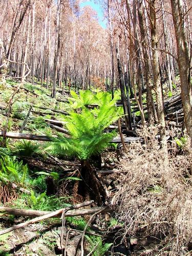 Australian Bushfire Recovery