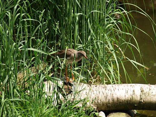 Dresdner Zoo