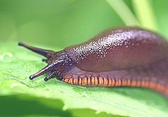 slug_4823