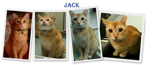 Yrs1-4-Jack