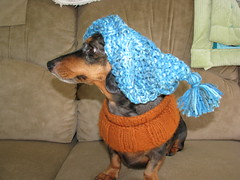 Dachshund & Tassled Hat