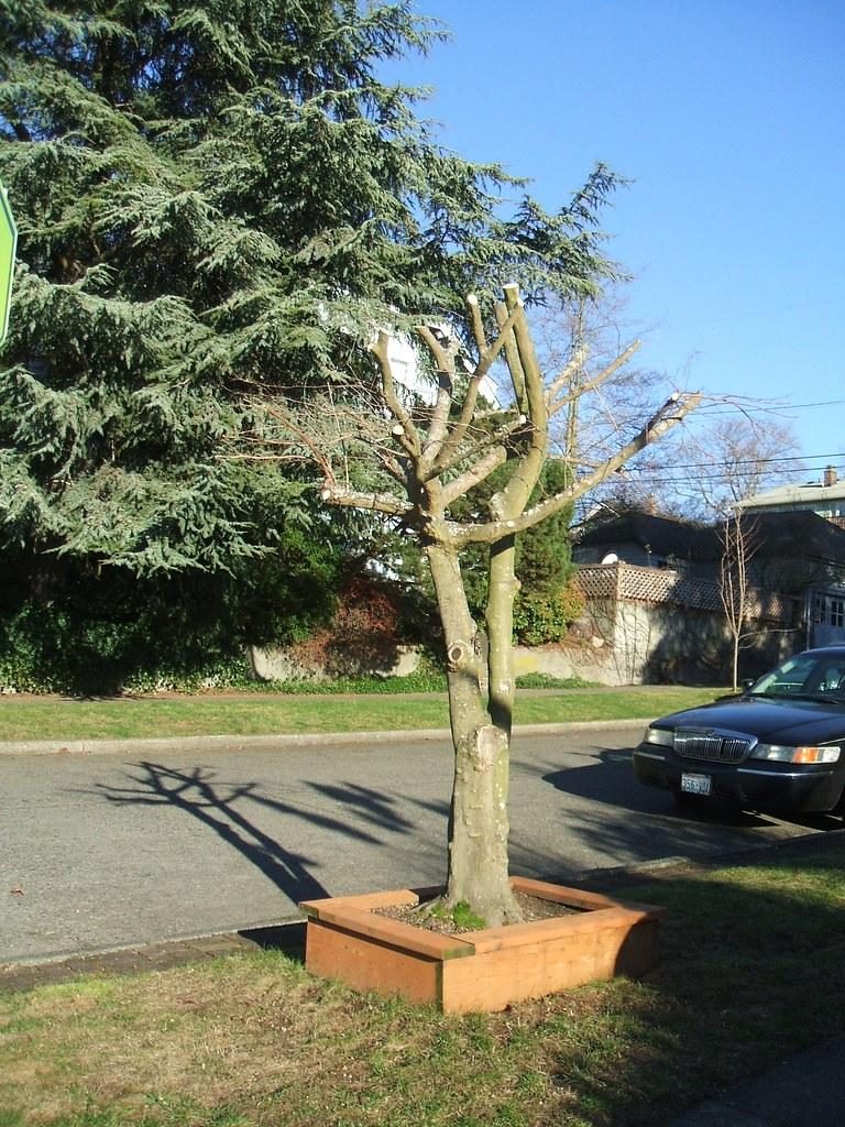 Tree pruning disaster
