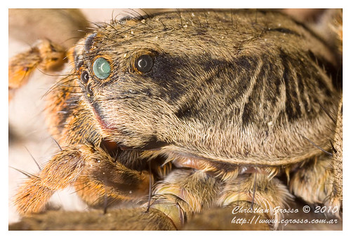 """Araña • <a style=""""font-size:0.8em;"""" href=""""http://www.flickr.com/photos/20681585@N05/4517711893/"""" target=""""_blank"""">View on Flickr</a>"""