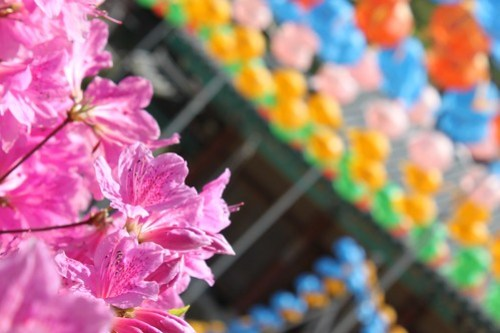 The spring colors of lanterns for Buddha's Birthday and blooming azaleas light up Jeungsimsa Temple, just a 10 minute walk from the art gallery at Gwangju's Medeungsan Provincial Park. If you're ever in Boseong, Gwangju is a worthwhile stop.