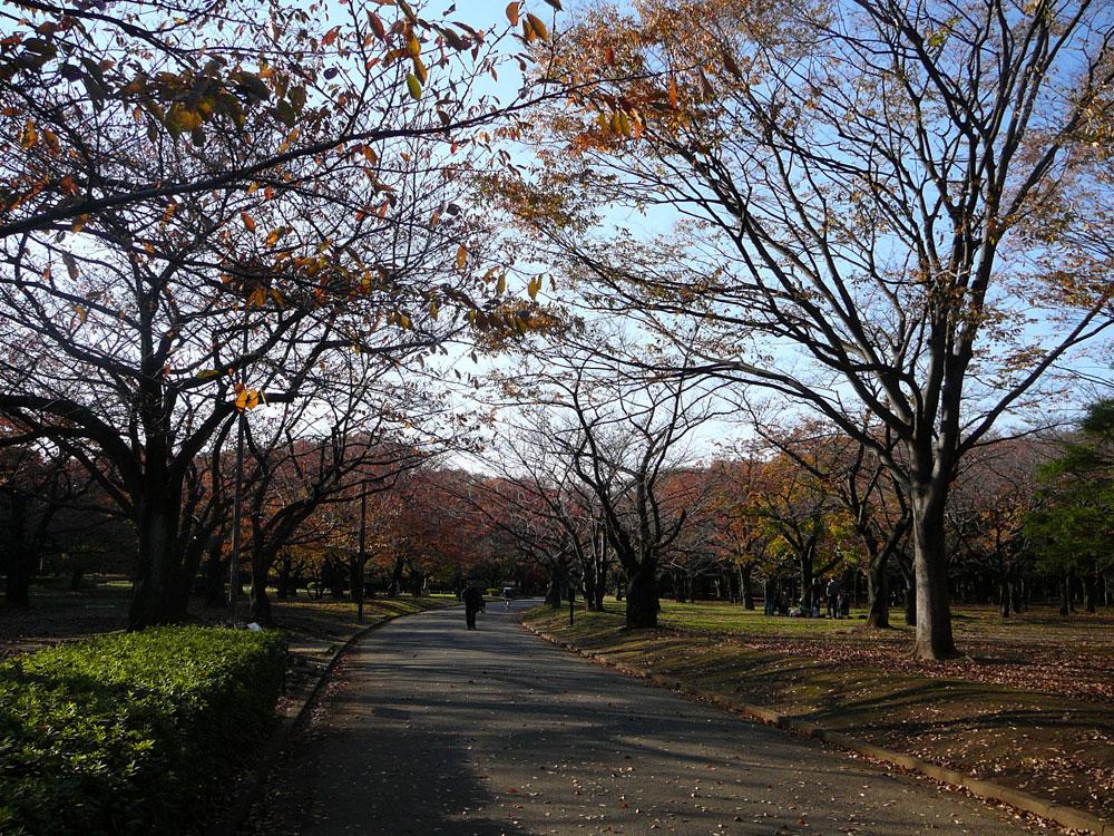 autumninyoyogi2