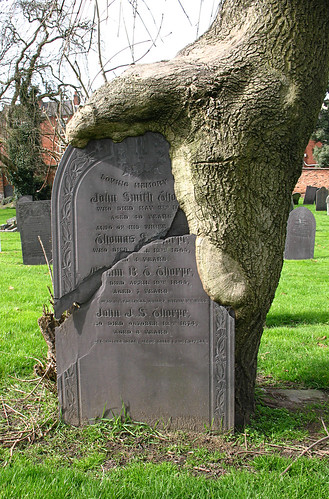 Tree Eating a Gravestone