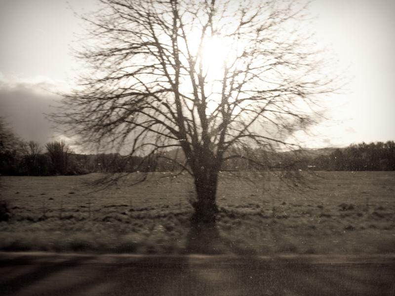 Driveby Tree