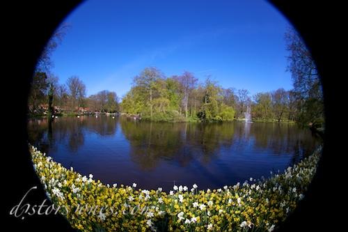 Flores en el lago