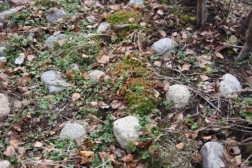 My rock garden