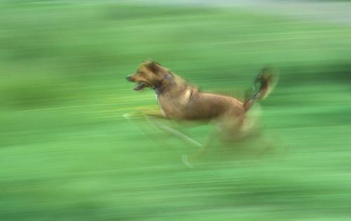 bruno blurry running