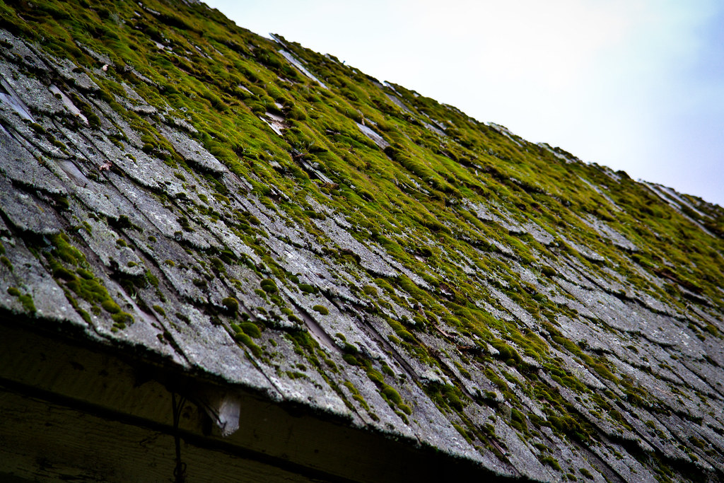 Abandoned farmhouse roof