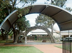 The Old Gum Tree