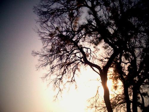1-16-10 iPhone photo