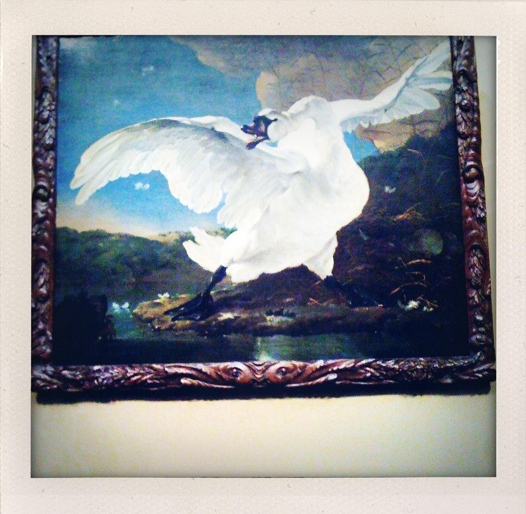 Rijksmuseum - El cisne