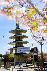 Peace Pagoda San Francisco