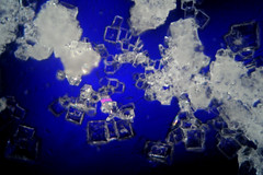 Salt Crystals (150X)