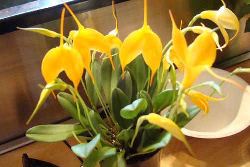 Housewarming orchids
