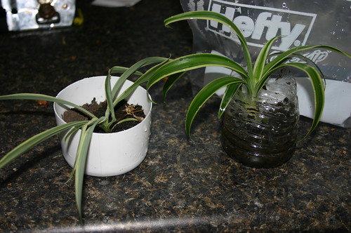 Science Experiment - Plant in Dry Environment versus Plant in Humid Environment