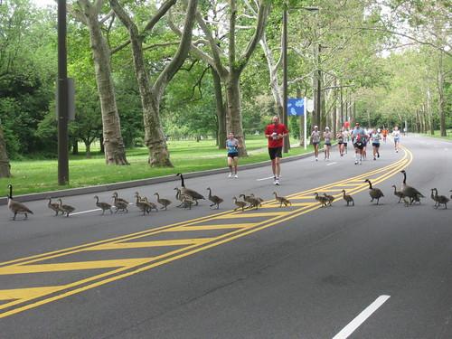oddyssey half marathon