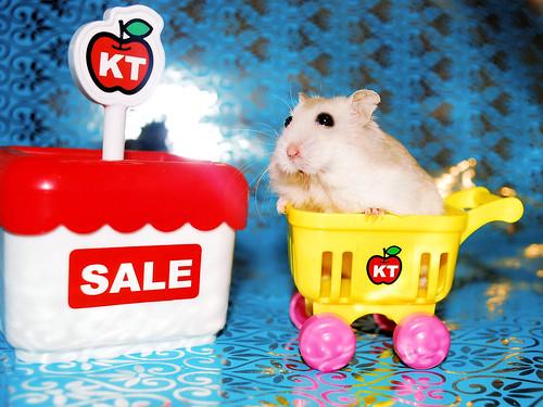 SALE! Buy yourself a tiny Tutku!