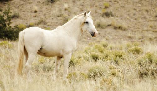 NM Wild Horses (55) nwm