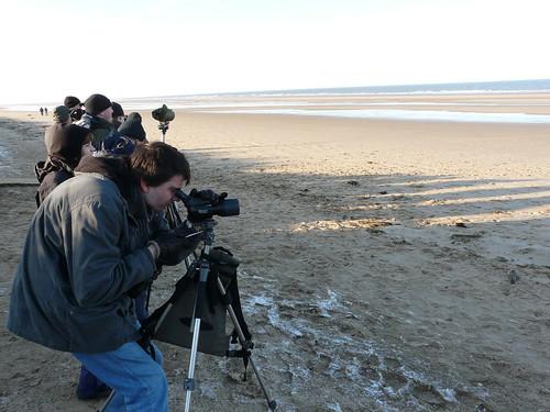 Birders on the beach