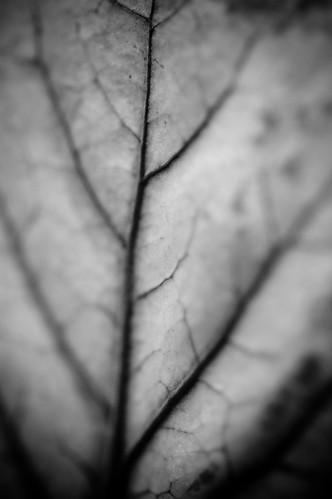 leafy [greens] (by bookgrl)