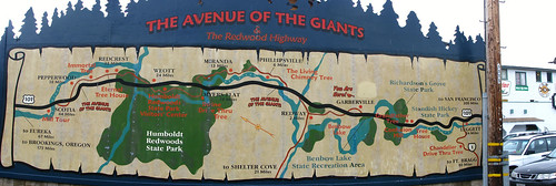 01 - Avenue of the Giants - 20100526