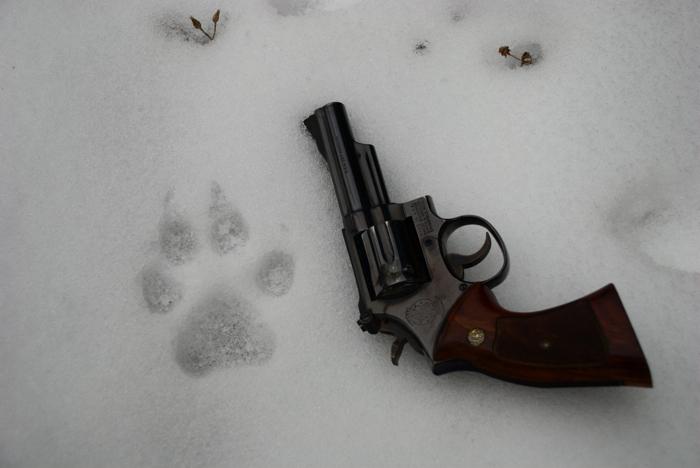 Wolf track