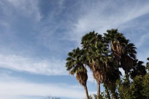 Palms near our condo