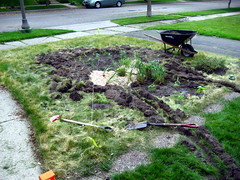 Front yard - beginnings