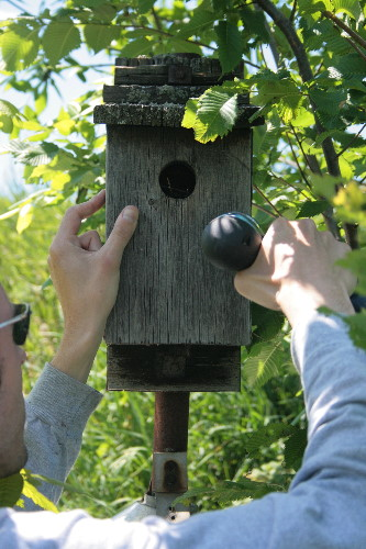 Checking a nestbox