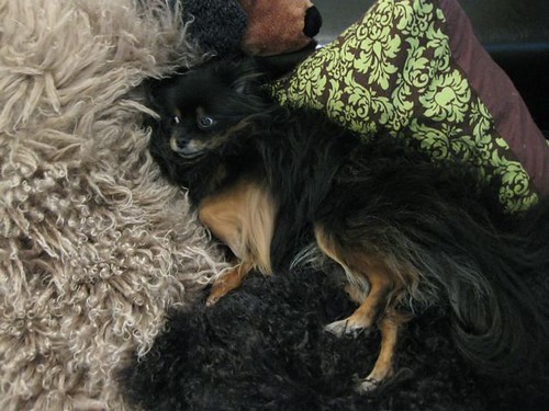 Kichou in Furs