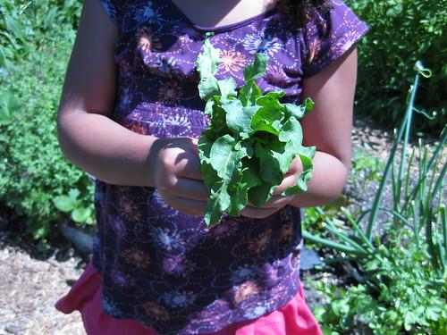 garden sorrel bouquet