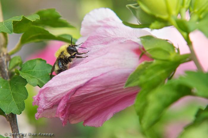 Backyard Bee