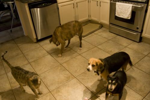 blurrydogs4