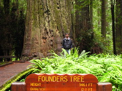68 - Avenue of the Giants - Founder's Grove - 20100526