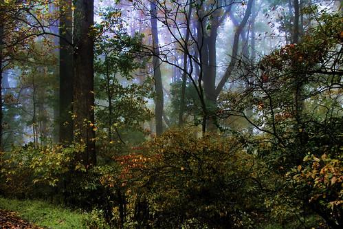 Edge of the Magic Wood