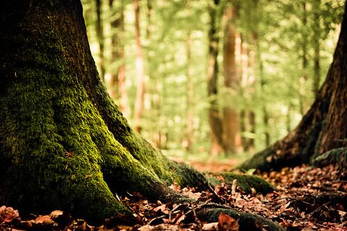 At Treebeard's feet