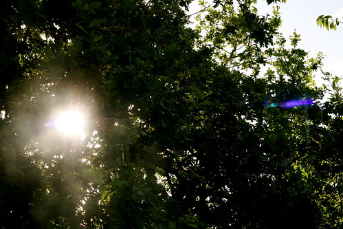 Sunday: Sun through the Trees