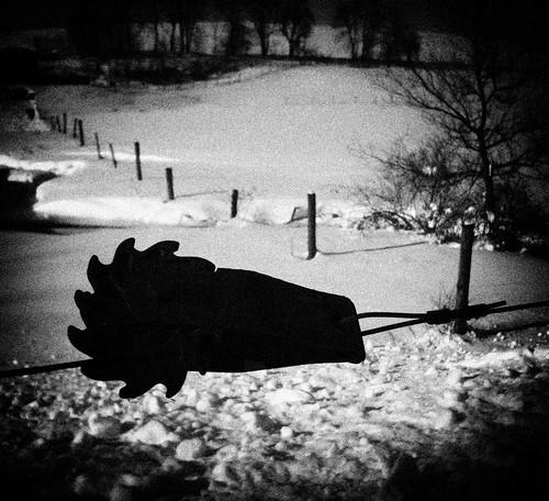 Winter Walk 14