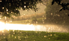 Rain Drops On My Window